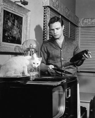 عکس مارلون براندو و گربه اش