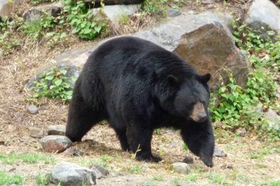 149572 490 شجاعت دو زن باحجاب و نجات دادن مردی که توسط خرس خورده میشد!! + عکس
