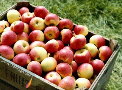 سیب ها می توانند شکم تان را تخت کنند