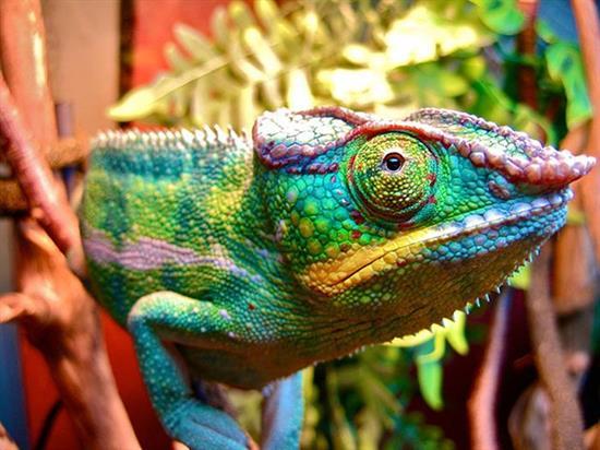 عکس زیبا از حیوانات 5