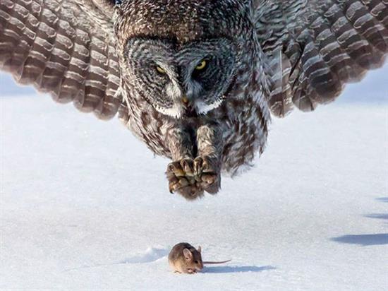عکس زیبا از حیوانات 4