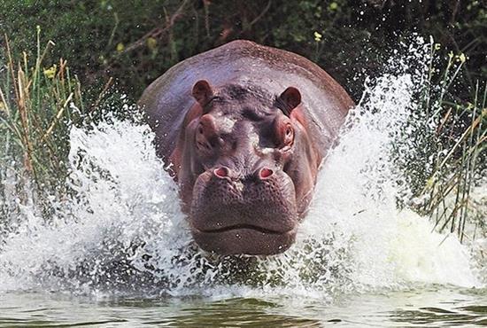 عکس زیبا از حیوانات 2