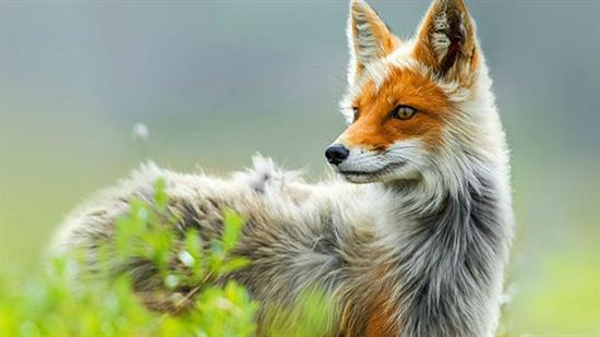 عکس زیبا از حیوانات 1
