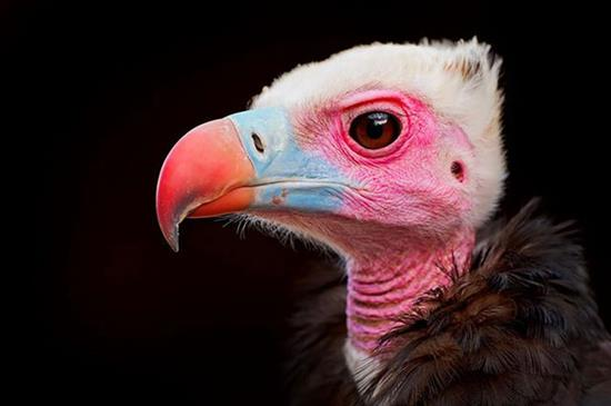 عکس زیبا از حیوانات 7