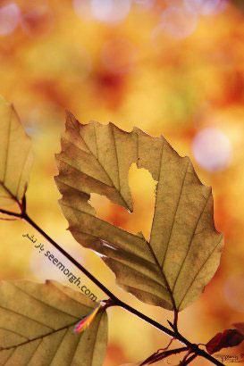پاییز,عکس پاییزی