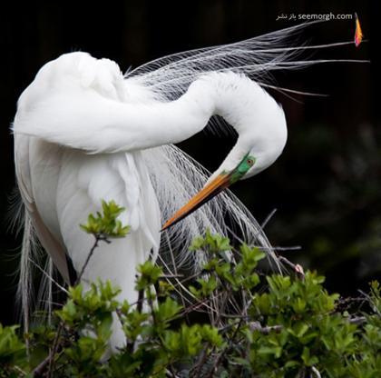25 عکس فوقالعاده از حیات وحش TAFRIHI.com
