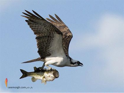 زیباترین عکسها از پرندهها! www.TAFRIHI.com