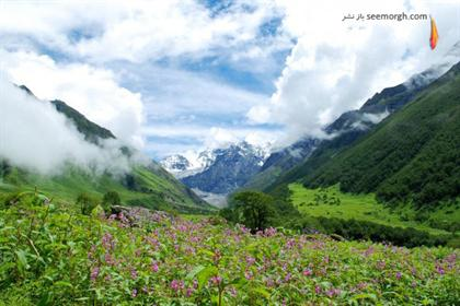 [Image: natural_wonders_india_valley_of_flowers-594x397.jpg]